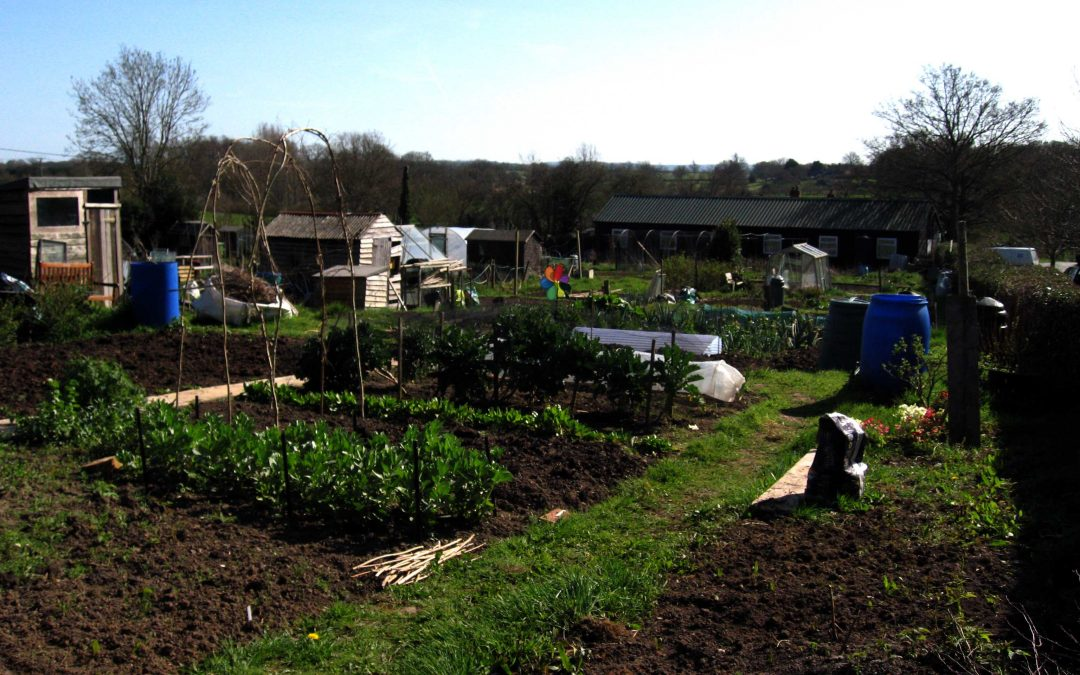 It's not all work at the Allotments !