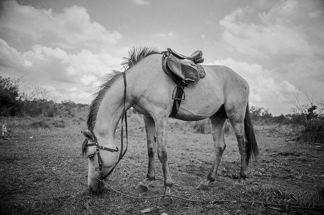 William Cobbett's Rural Rides