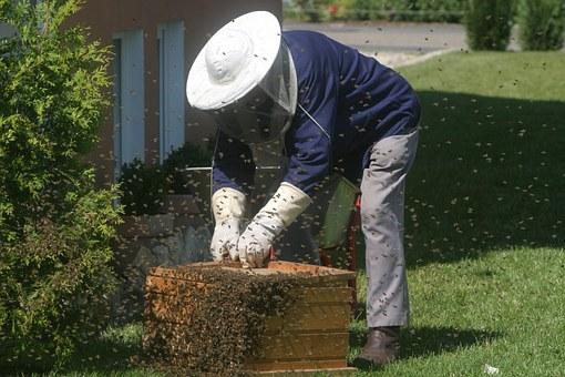 A beekeeper tending a hive