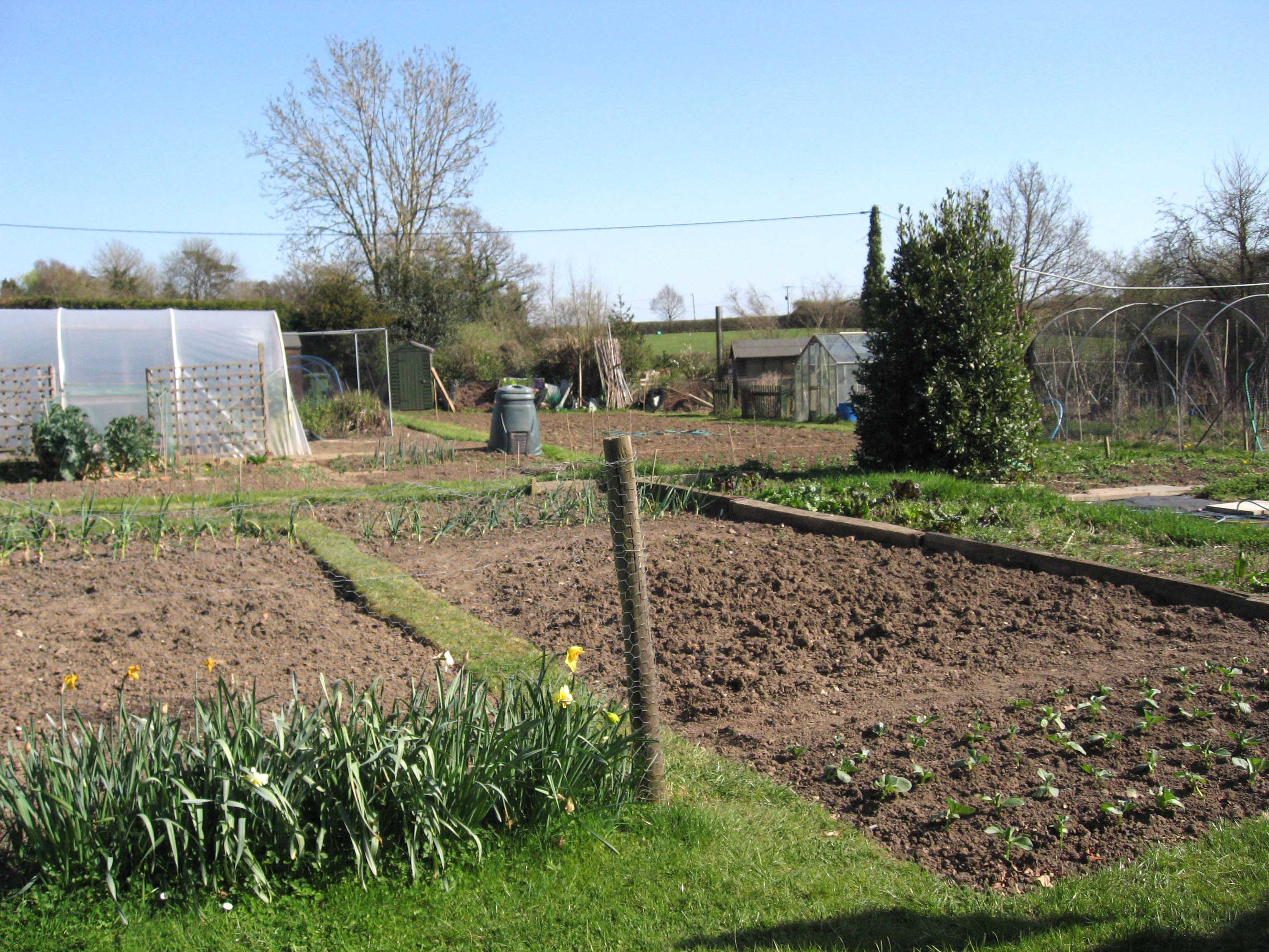 An allotment plot cultivated and ready for planting