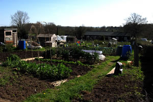Manage the allotments