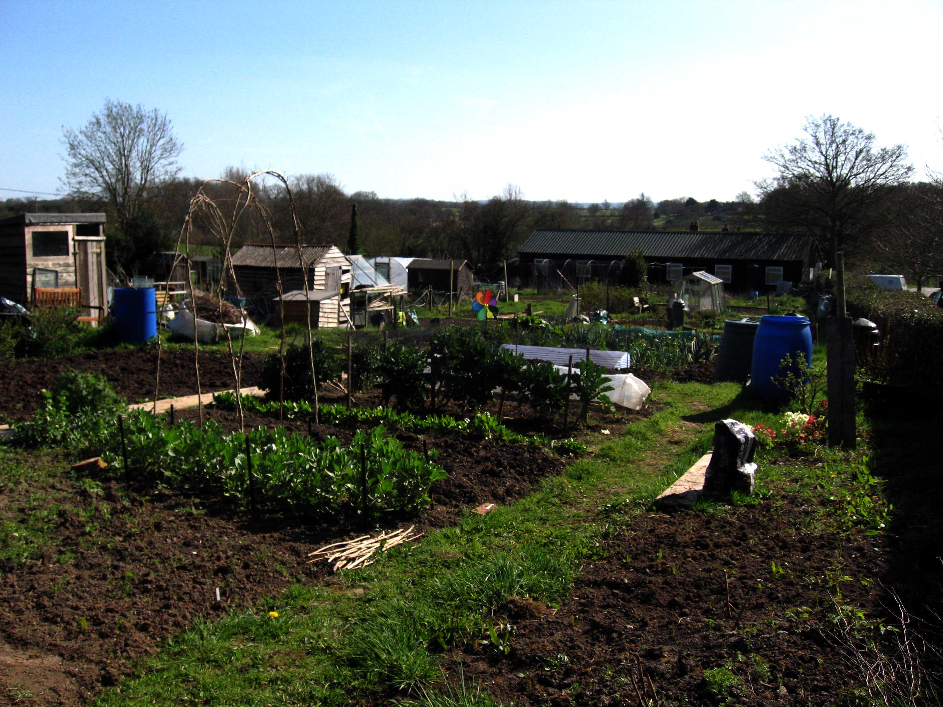 Allotments with growing crops