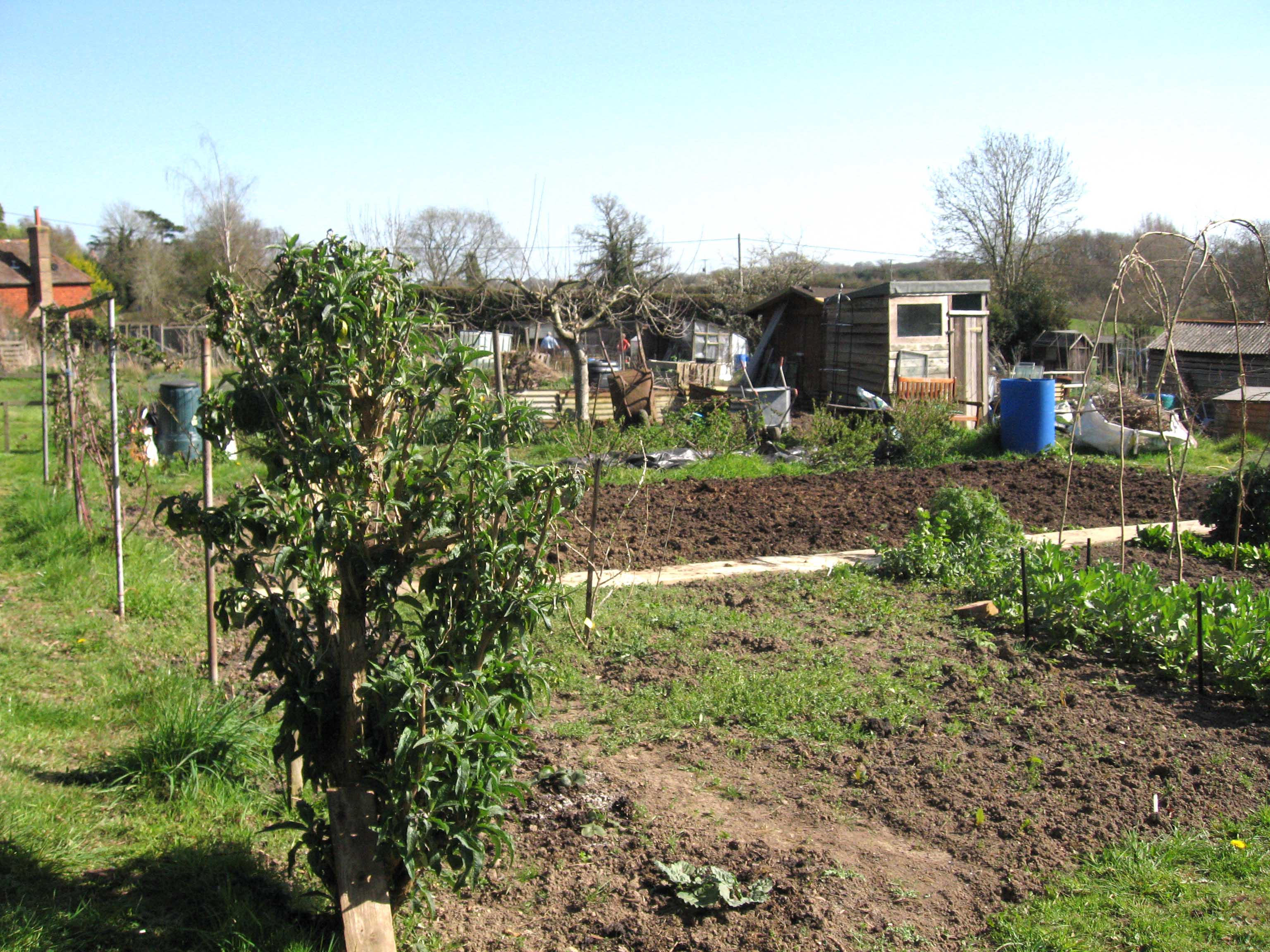 Allotment plots being cultivated