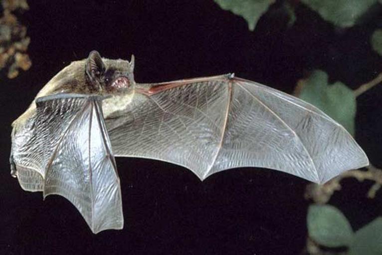 The Parishes Wildlife Group Update